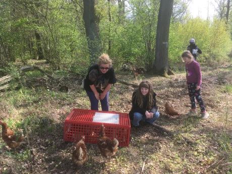 5d82ae012a5b0c ... die in einem kleinen Waldstück zwischen zwei Dörfern im Raum  Wolfsburg Gifhorn eine Gruppe vermutlich ausgesetzter Hühner entdeckt  hatten.
