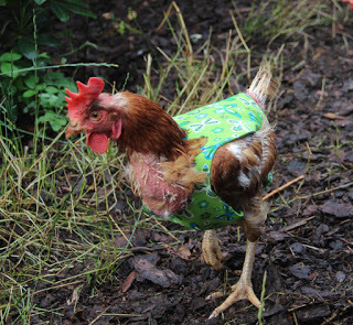 Rette Das Huhn