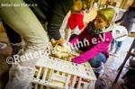 34 Bodenhaltung Schleuse Hühner in die Box setzen