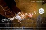 37 Bodenhaltung Schleuse Hühner in Kleintierkäfig