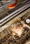 52 Bodenhaltung drinnen totes Huhn auf Gitter