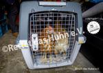 59 Bodenhaltung Pflegehühner im Gockeltaxi